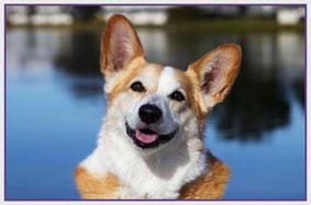 Vivian Liu Photo Services | Pet Photos