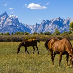 viv_liu_photography_grand_tetons5