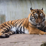viv_liu_photography_animals2